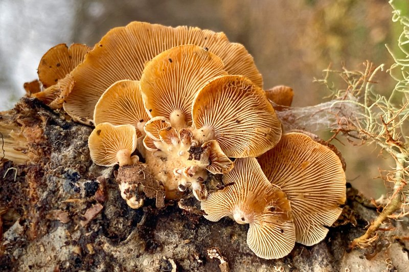 Chatham Mushrooms: A Walk on the Wild Side